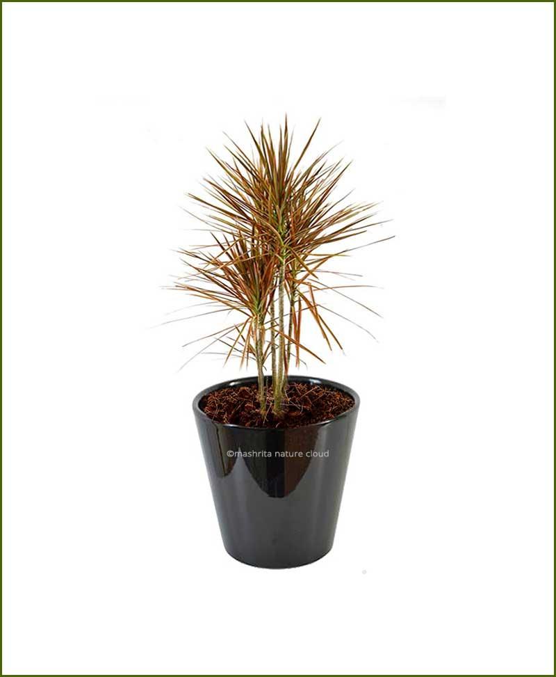 Ceramic Glazed Planter Black 10 Inch