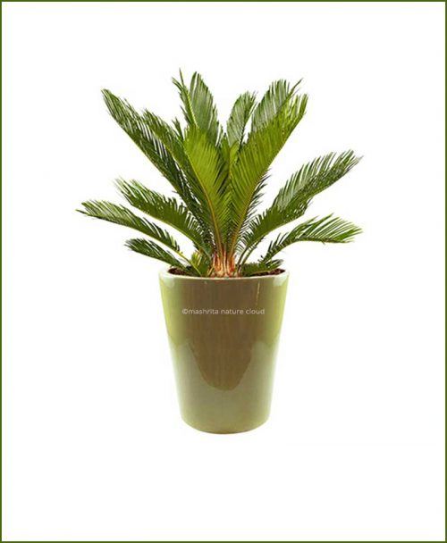 Ceramic-Glazed-Planter-Olive-10inch