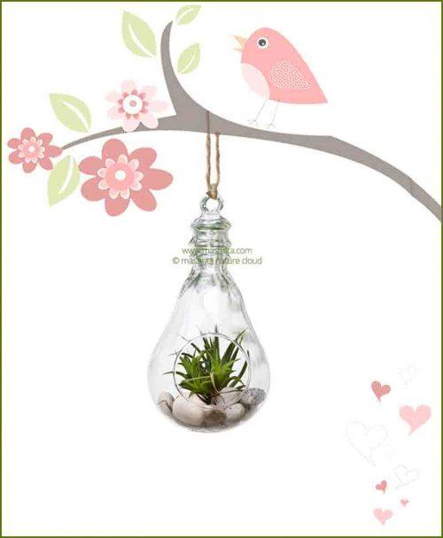 Hanging Terrarium Bulb