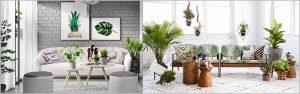 Planning Indoor Plantscaping – Indoor Plantscaping Design Considerations
