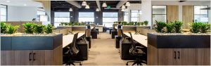 Air Purifier Office Plants Rental
