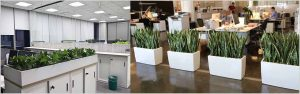 Planning Office Plantscaping – Office Plantscaping Design Considerations