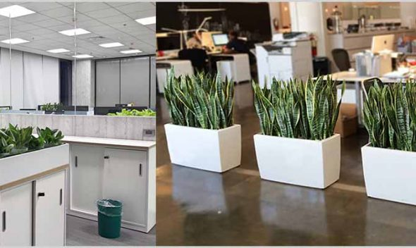 Planning Office Plantscaping – Office Plantscaping Design Considerations