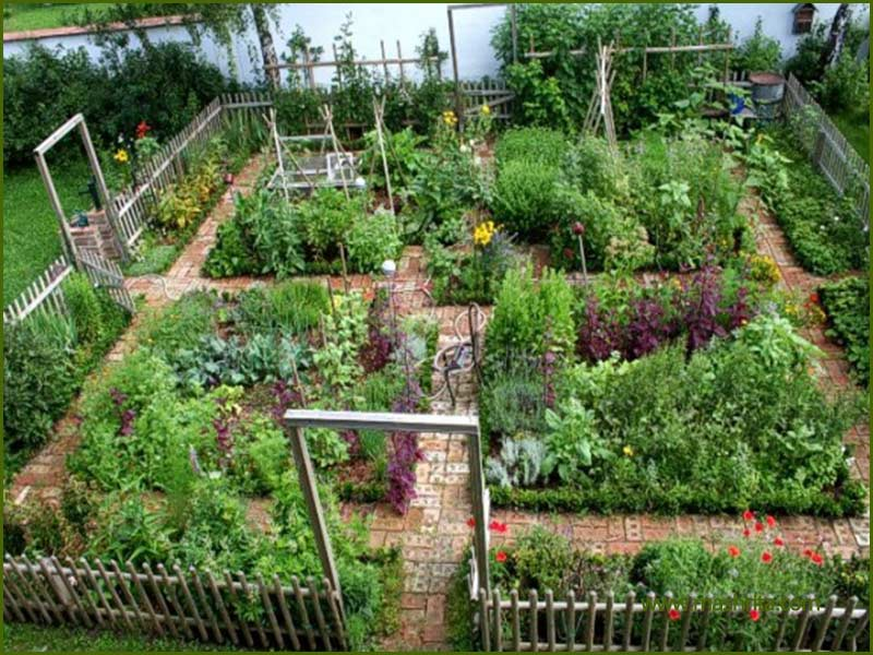 Kitchen-Garden-Backyard