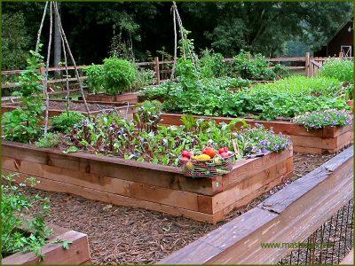 Kitchen Garden Noida