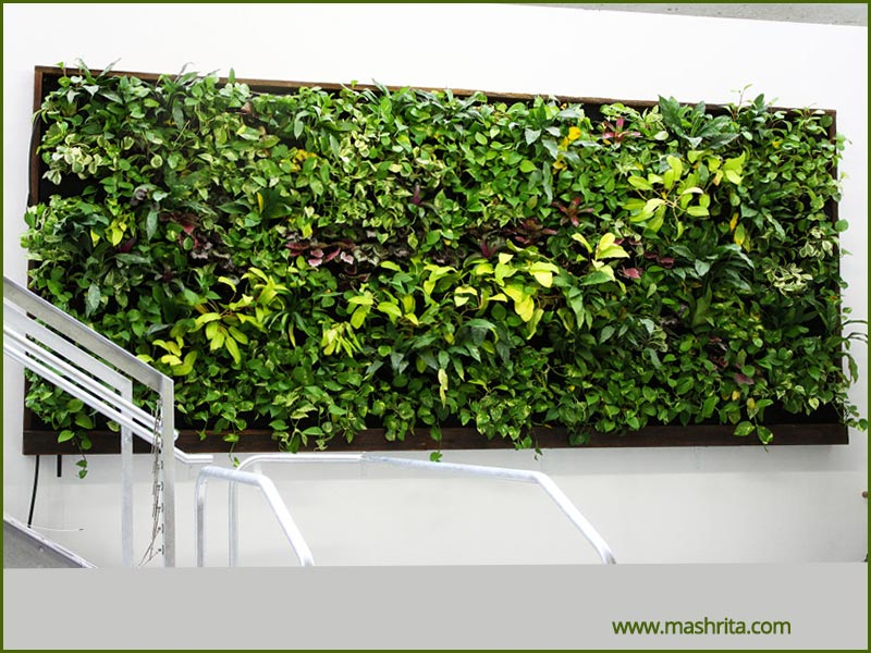 Vertical Garden Live Wall