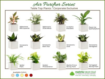 Gift Plants For Office