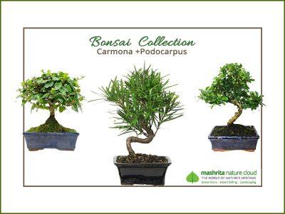 Green Gifting India