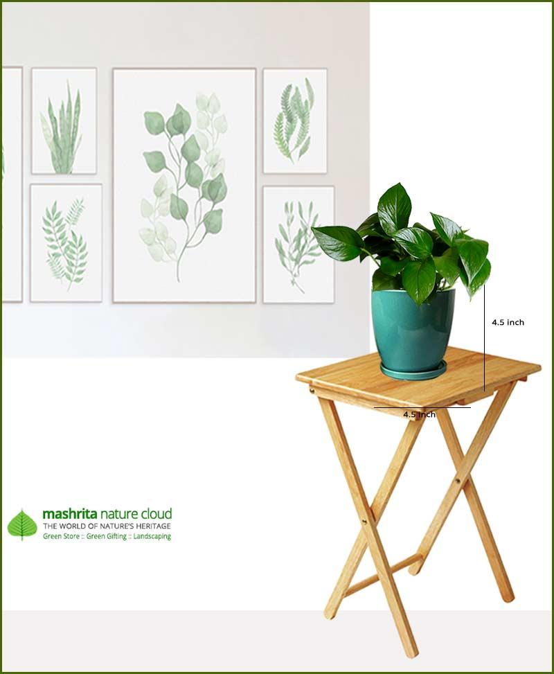 Money Plant Jade in Sea Green Oval Ceramic Pot