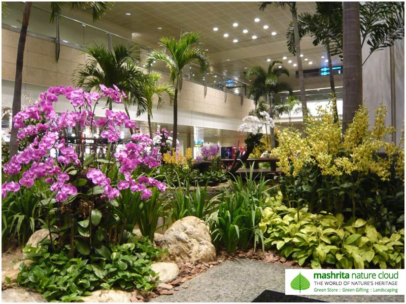 Indoor Plantscaping Gurgaon