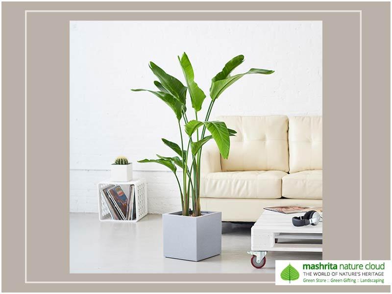 Indoor Plantscaping Living Room