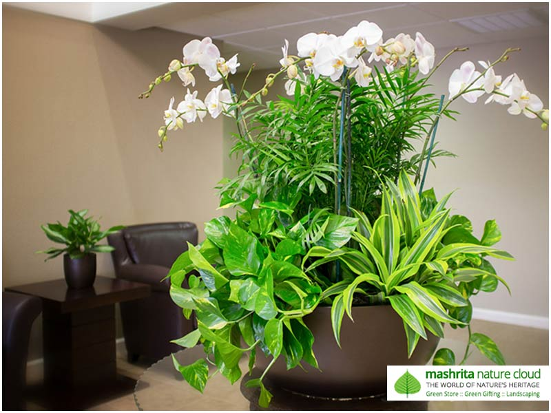 Indoor Plantscaping Table Top