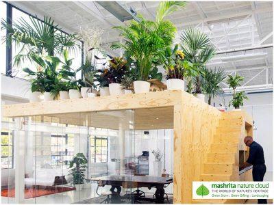 Indoor Plantscaping Caffeteria