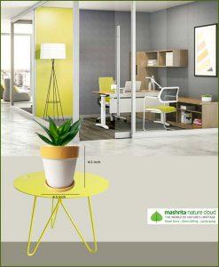 Sansevieria Hahnii Jade with Yellow Strip White Ceramic Pot