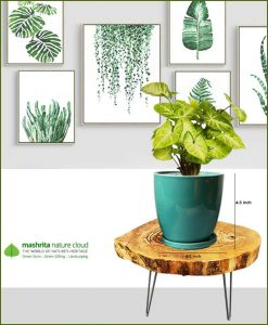 Syngonium Pixie with Sea Green Oval Ceramic Pot