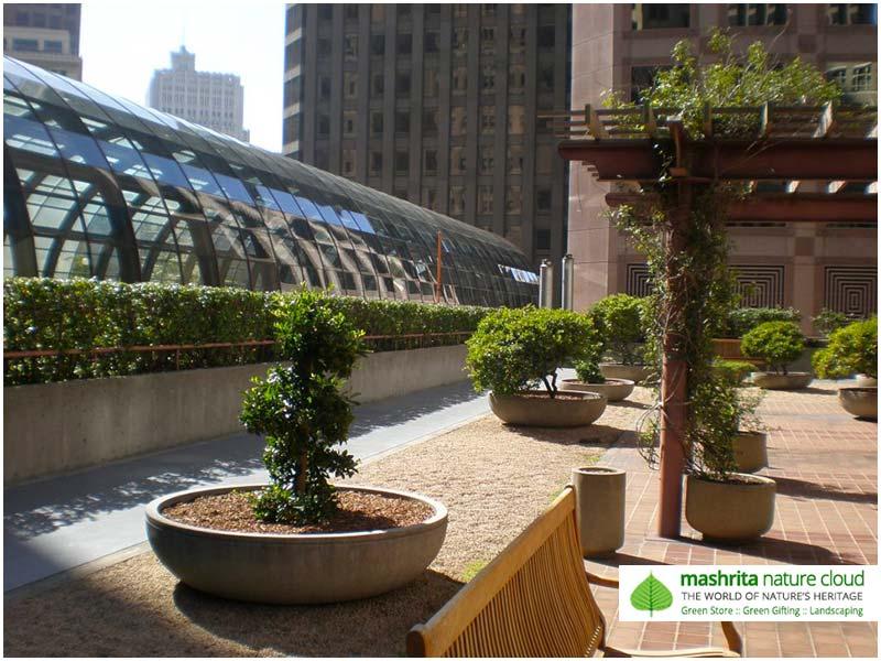 Terrace garden galleries for Terrace 33 city garden