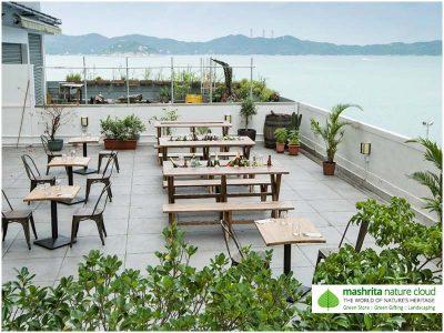 Terrace Garden India