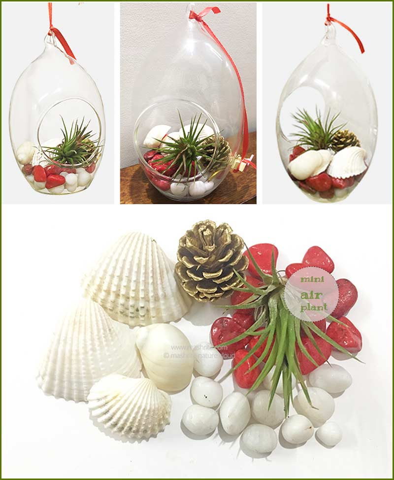 Hanging Oval Terrarium With Air Plant Kit