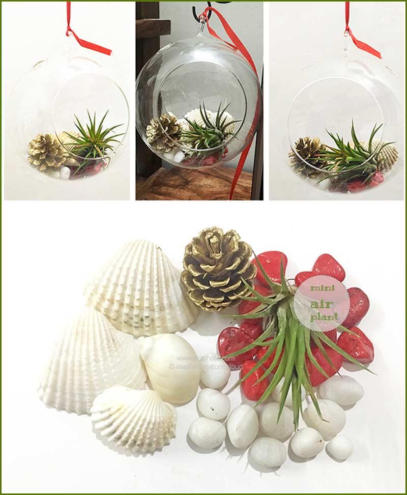 Terrarium Kits Wholesale Garden Plants Nursery India