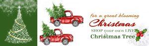 Buy Christmas Plants Online © Mashrita