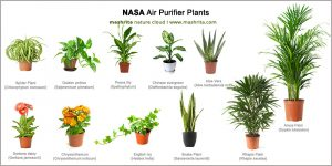 29 Best Air Purifying Plants from NASA Clean Air Study
