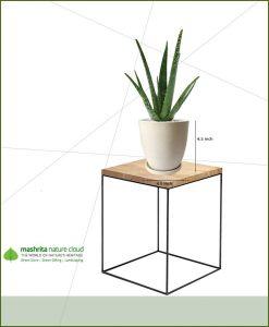 Aloe Vera in Off White Oval Ceramic Pot