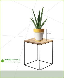 Aloe Vera in Yellow Strip White Ceramic Pot