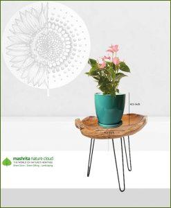 Anthurium Pink in Sea Green Oval Ceramic Pot