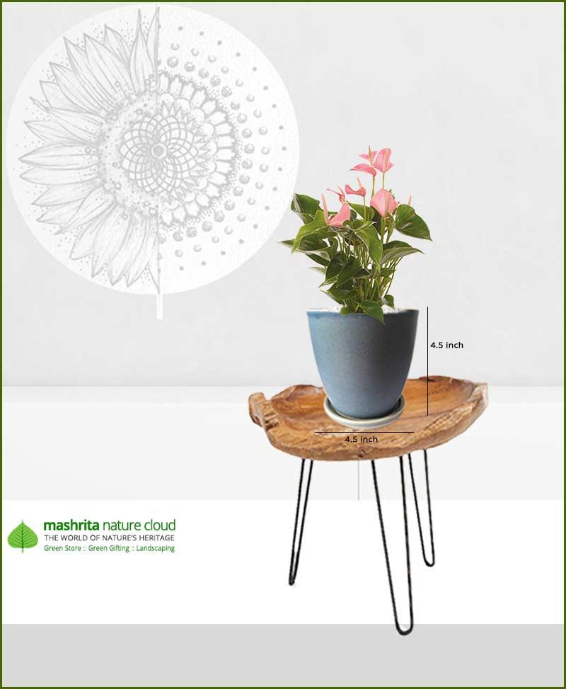 Anthurium Pink in Sky Blue Oval Ceramic Pot