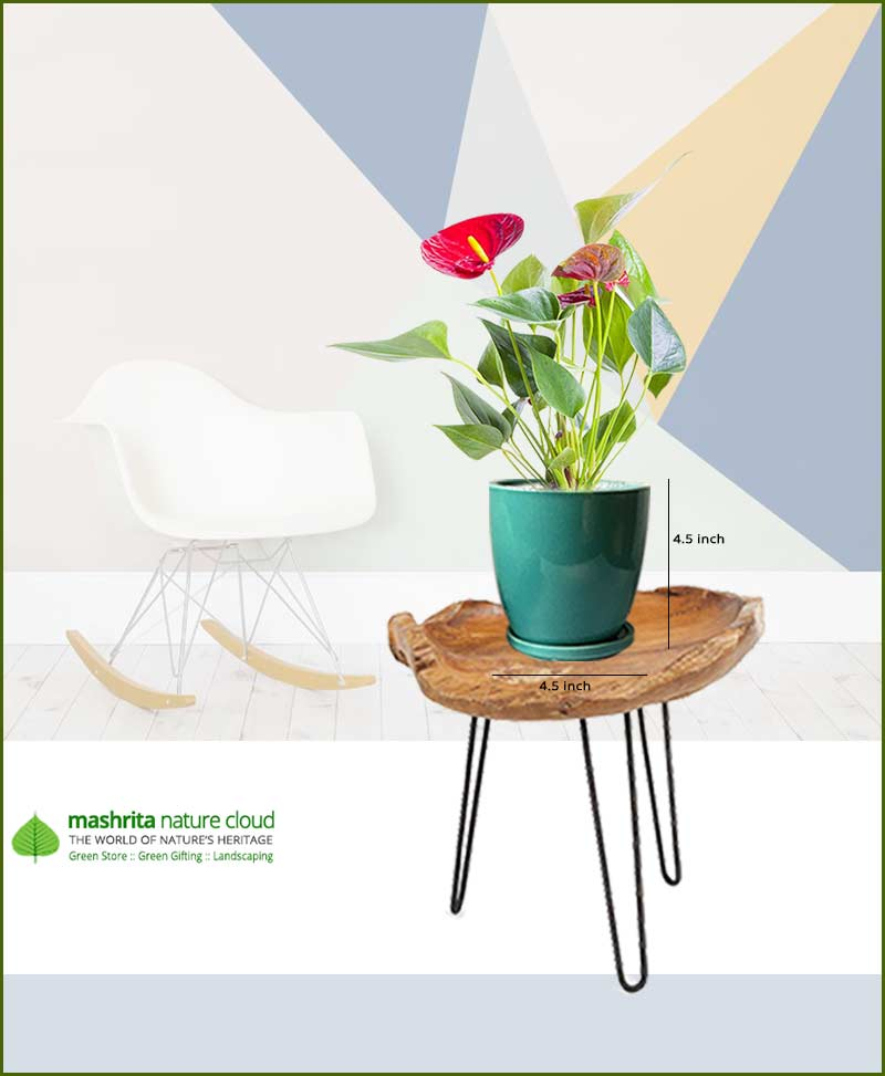 Anthurium Red in Sea Green Oval Ceramic Pot