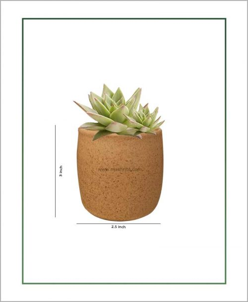 Ceramic Round Succulents Pot Beige 3 inch