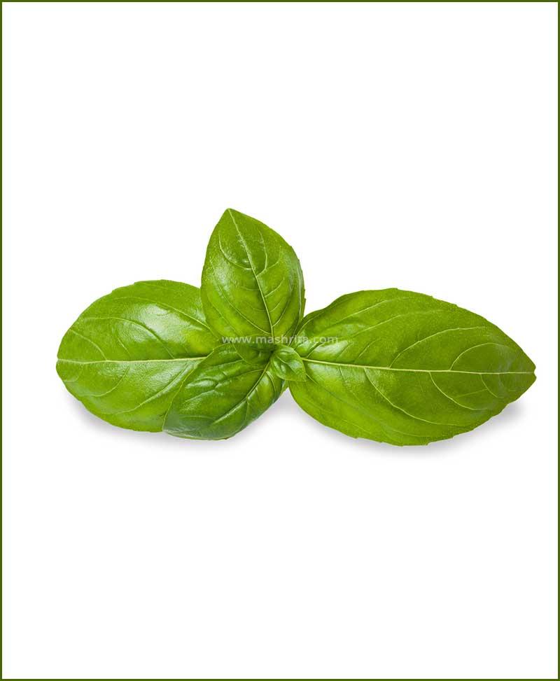 Buy-Italian-Genovese-Basil-Potted-Plant-(Ocimum-Basilicum)
