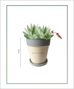 Ceramic V Shape Table Top Pot with Tray Sky Blue Strip 4.5 inch