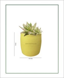 Ceramic Round Succulents Pot Pastel Green 3 inch