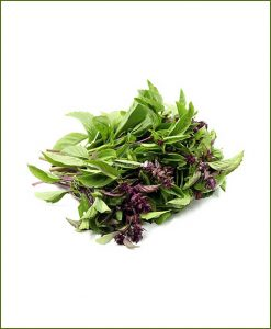 Vietnamese-Basil-Potted-Plant-(Ocimum-Cinnamon)