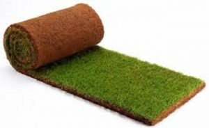 Bermuda Grass Roll