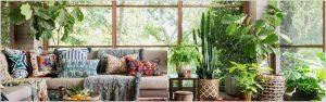 Best 10 Indoor Plants for Delhi NCR Weather Conditions