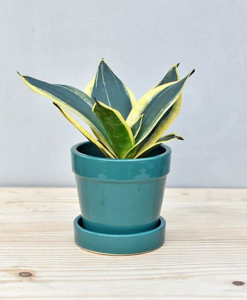 Ceramic Pots Planters Gurgaon Delhi Noida India