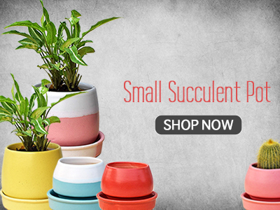 Shop Succulent Pots India