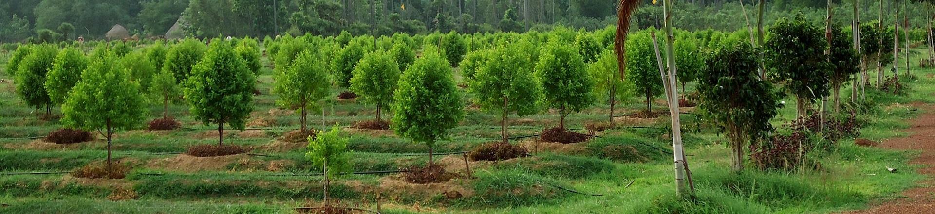 Corporate Tree Plantation