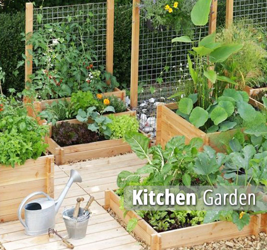 Kitchen Garden Delhi Gurgaon Noida India