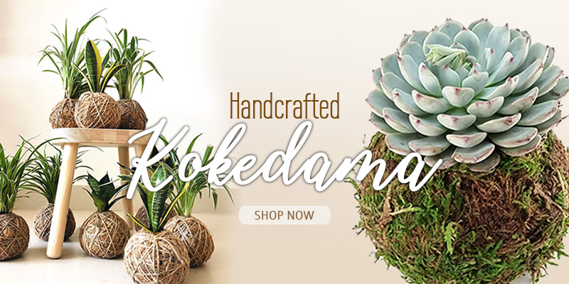 Shop Kokedama Online India