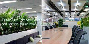 Office Plants Rental