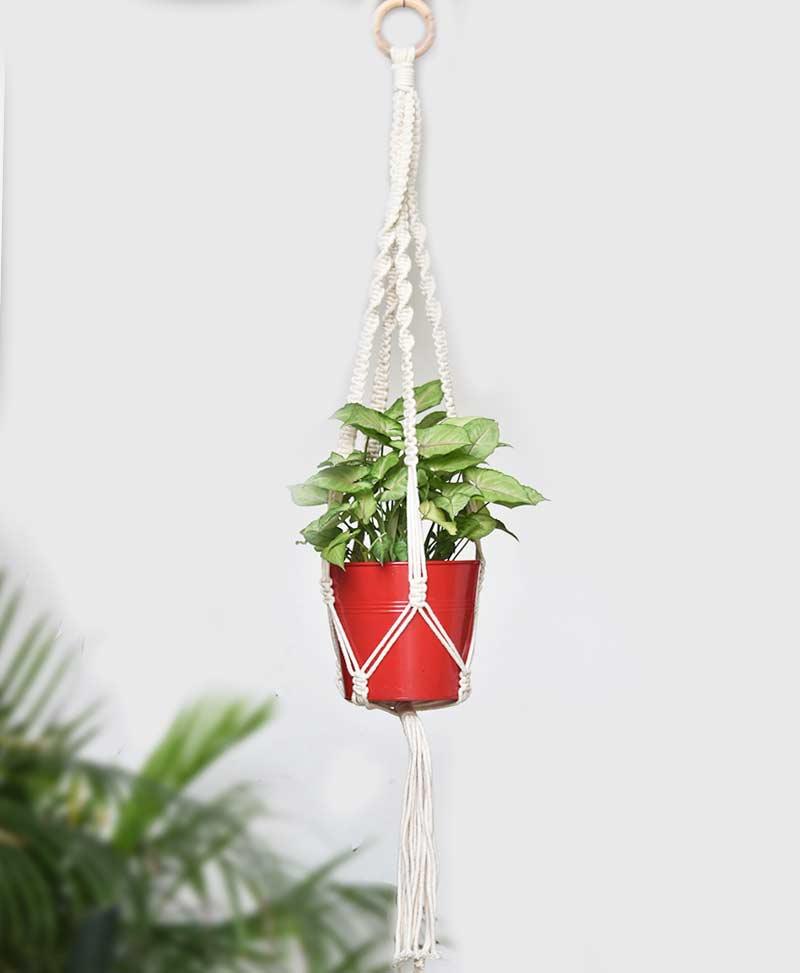 Macrame Plant Hanger Type 2