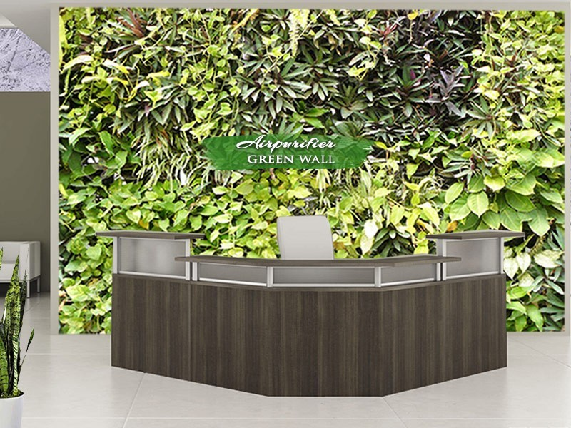 Air purifier green wall office