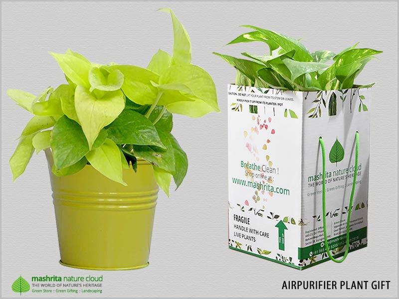 Airpurifier Plant Gifts Delhi