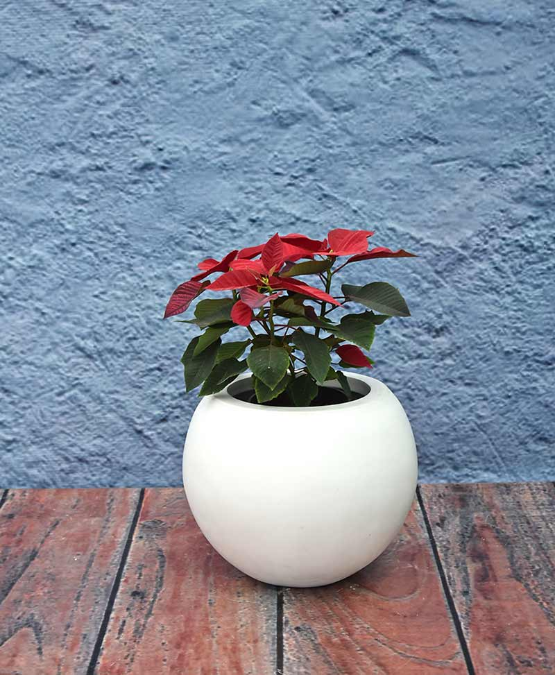 Ball Shape Planter 12 inch