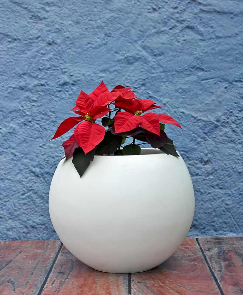 Ball Shape Planter 18 inch