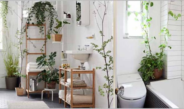Best 10 bathroom plants to clean germs, bacterias and airborne pollutants