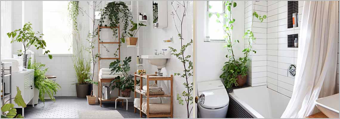 Charming Bathroom Plants Part - 6: Best 10 Bathroom Plants To Clean Germs, Bacterias And Airborne Pollutants